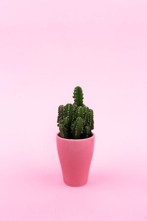 Background. Green cactus on a pink background in a pink pot. Abstraction. Banco de Imagens
