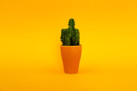 Background. Green cactus on a yellow background in a pink pot. Abstraction.-Image