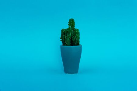 Background. Green cactus on a yellow background in a blue pot. Abstraction.-Image 스톡 콘텐츠