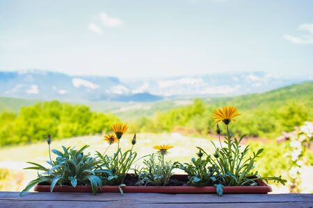 Yellow flowers on a background of mountains and green fields. Nice warm weather. Foto de archivo