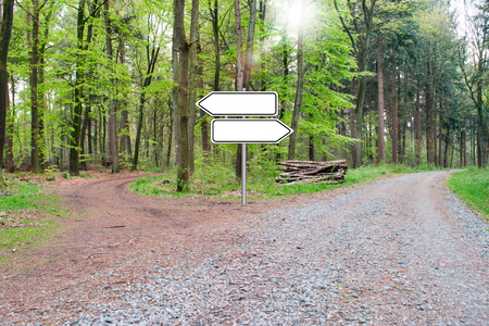Bifurcation of a footpath in the wood - Choose your way. Empty Sign. 写真素材
