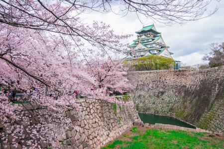 Osaka castle with cherry blossom photo