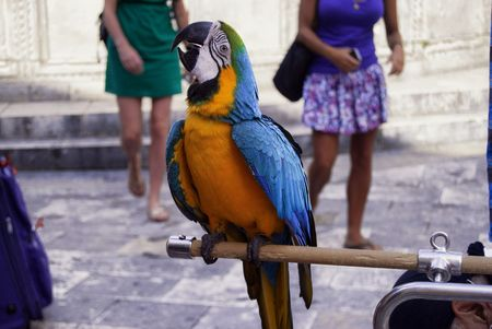 Parrot with bright colors Imagens - 94603299