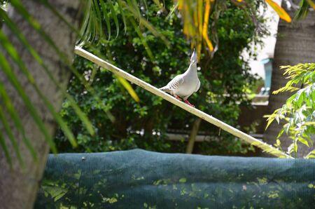 A dove in the backyard