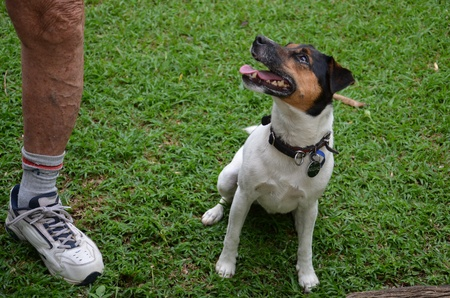 Hungry crossed dog; Jack Russel