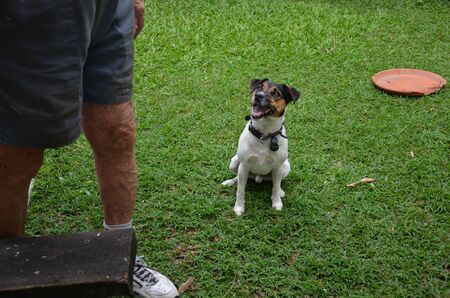 A cute dog is looking at his boss in the backyard Stock Photo
