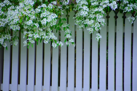 White fence with snow flake photo