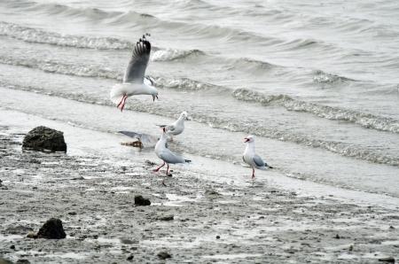 Seagulls going berzerk photo