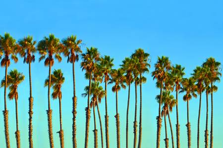 Nice blue sky and palm trees along the beach