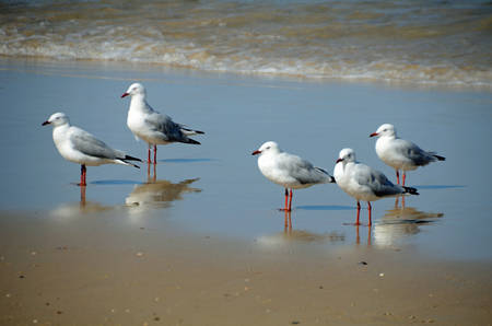 Seagulls standing in a tide pool photo