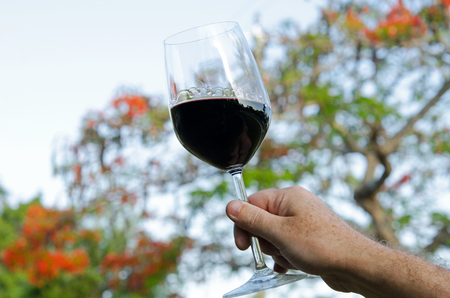 tree linked: A hand holding a glass of wine with legs Stock Photo