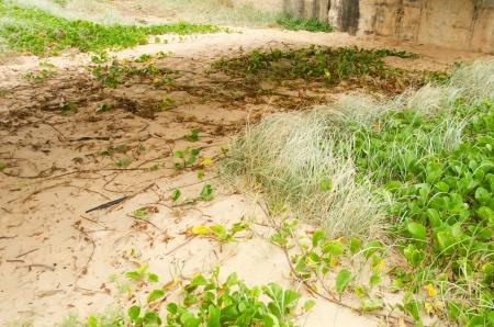 les plantes qui poussent dans le sable sur la plage banque d