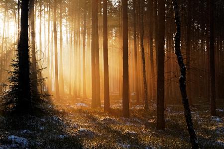 Salida del sol en el bosque de invierno Foto de archivo - 52406003