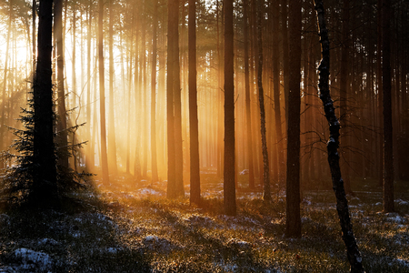 in the woods: Sunrise in winter forest Stock Photo