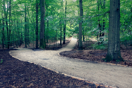 View of the path in the forest