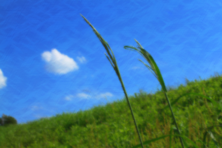 fresh green and blue sky Stock Photo