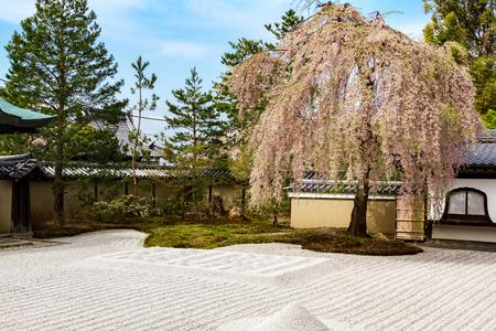 Kyoto cherry blossoms Hill Temple Editorial