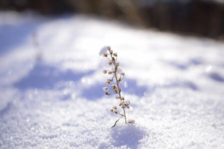 Wildflowers in the snow