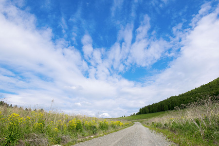 Empty countryside road through fields to the sky. In the mountains Altai.