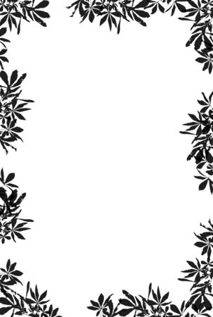 Grunge Leaves Border (with clipping path for easy background removing if needed) photo