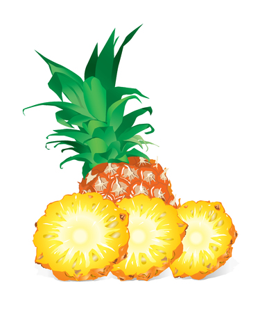Pineapple (vector or XXL jpeg image)
