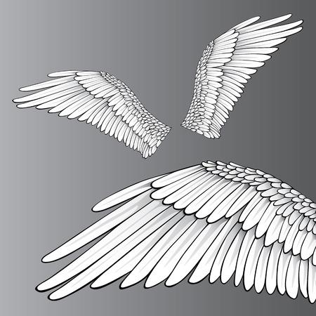 angelic: Alas (ilustraci�n realista  elementos de dise�o)