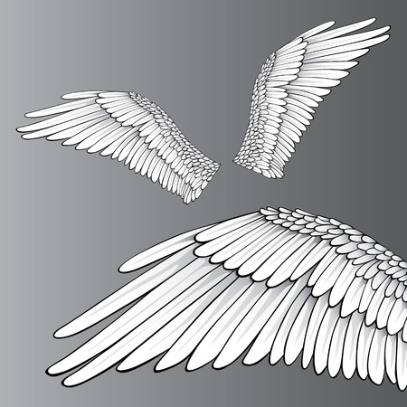 Wings (Realistic Illustration  Design Elements)