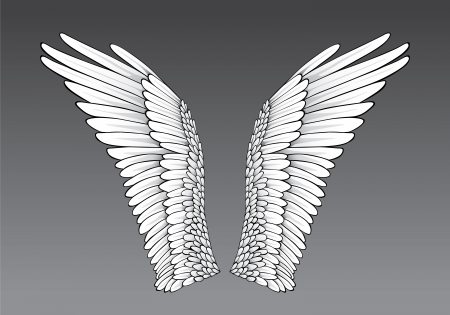 wings isolated: Wings Illustration