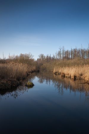 apocalyptic: Calm creek in apocalyptic swamp landscape