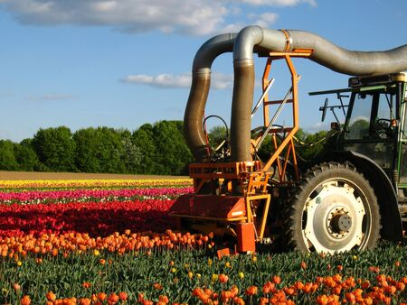 Mechanically harvest from tulips Stock Photo - 5851419