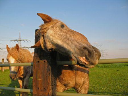 farme: Cavallo