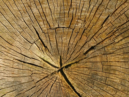 forest products: Cross-section of an old tree trunk Stock Photo