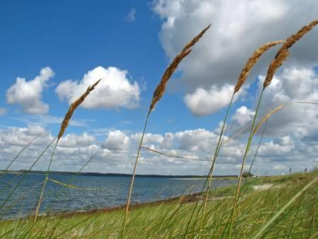sea grass: Blades of grass Stock Photo