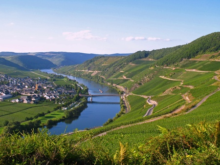 viniculture: River landscape with vineyards at the Moselle in Germany