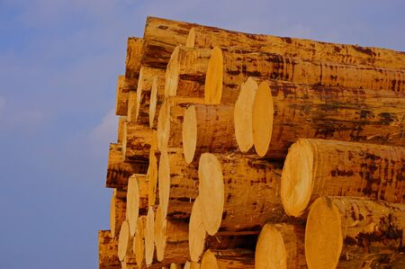 forest products: Tree trunks               Stock Photo