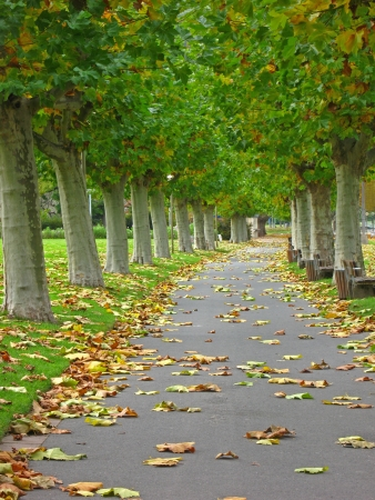 equinox: Avenue at the beginning of autumn Stock Photo