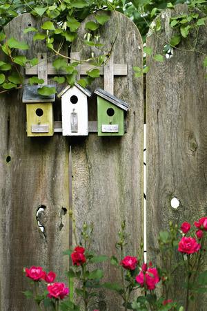 birds nest: Three birdhouses on old wooden fence
