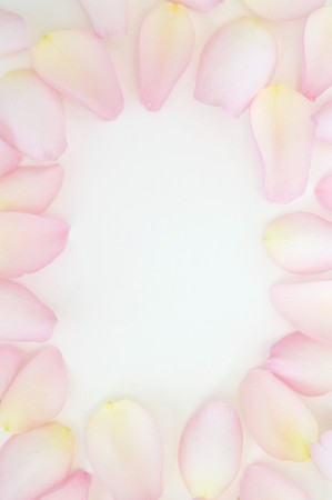 petals on white background in shape of frame photo