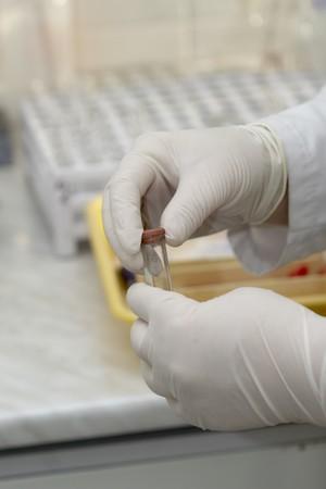 specimen testing: close-up de los trabajadores en manos guantes y tubo de ensayo en laboratorio
