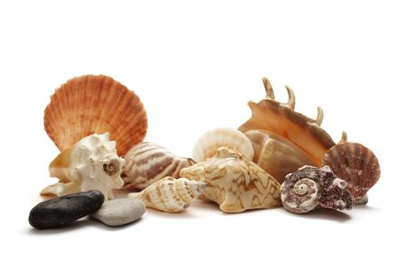 collection of seashell on white background  Stock Photo