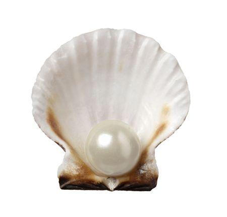 perlas: de cerca de la concha de mar abierto con perlas en el fondo blanco con trazado de recorte