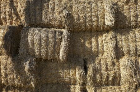 agriculture hay bale close up Stock Photo - 6602583