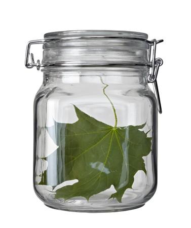 close up of jarand green leaf on white background photo