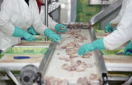 domestic production: close up of poultry processing in food industry