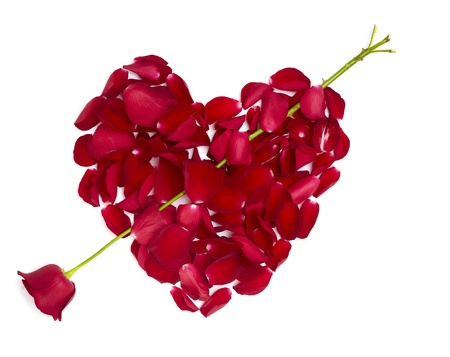 rose petals forming heart shape on white background photo