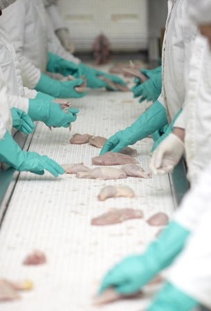 close up of poultry processing in food industry photo