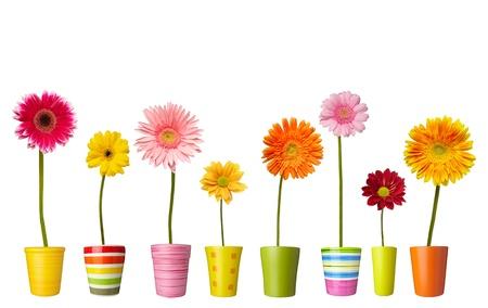 collectie van daisy bloem op witte achtergrond. elk wordt afzonderlijk neergeschoten Stockfoto