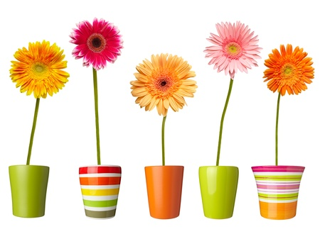plant pot: collection of  daisy flower on white background. each one is shot separately Stock Photo