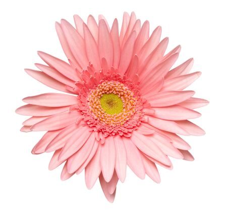 close up of  daisy flower on white background  with clipping path photo