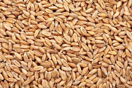 background of a close up of wheat photo